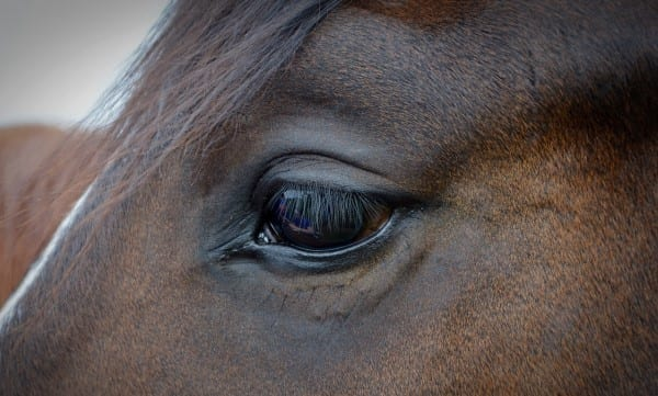Lijn In Je Leven horseeye Hoe werkt Lijn?