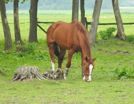 Lijn In Je Leven paardwei Wie is Lijn?